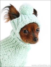 индивидуальный пошив одежды для собак