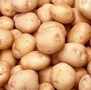 Продам семенную картошку