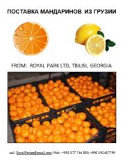 мандарины из Грузии