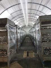 Сборщица грибов